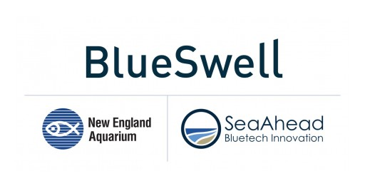 SeaAhead and New England Aquarium Announce the BlueSwell Incubator's First Cohort of Selected Startups