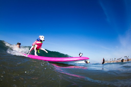 Hot Dogging at the 8th Annual Unleashed by Petco™ Surf City Surf Dog® Competition
