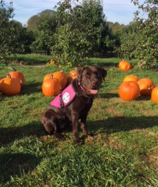 Samba, a SDWR Diabetic Alert Service Dog, was delivered to an 11-year-old girl in Groton, Ct