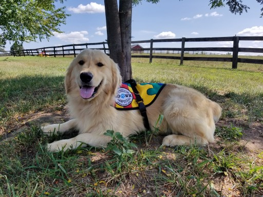 Trained Autism Service Dog to Help Seven Year Old  in Stockton, California.