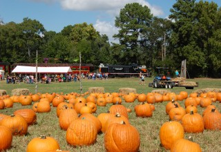 Pumpkin Patch at Texas State Railroad