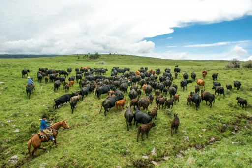 RanchMeat Offers Innovative New Way to Connect Cattle Ranchers With Consumers