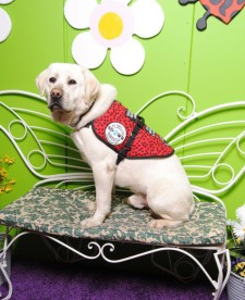 Deacon, a highly trained Diabetic Alert Dog