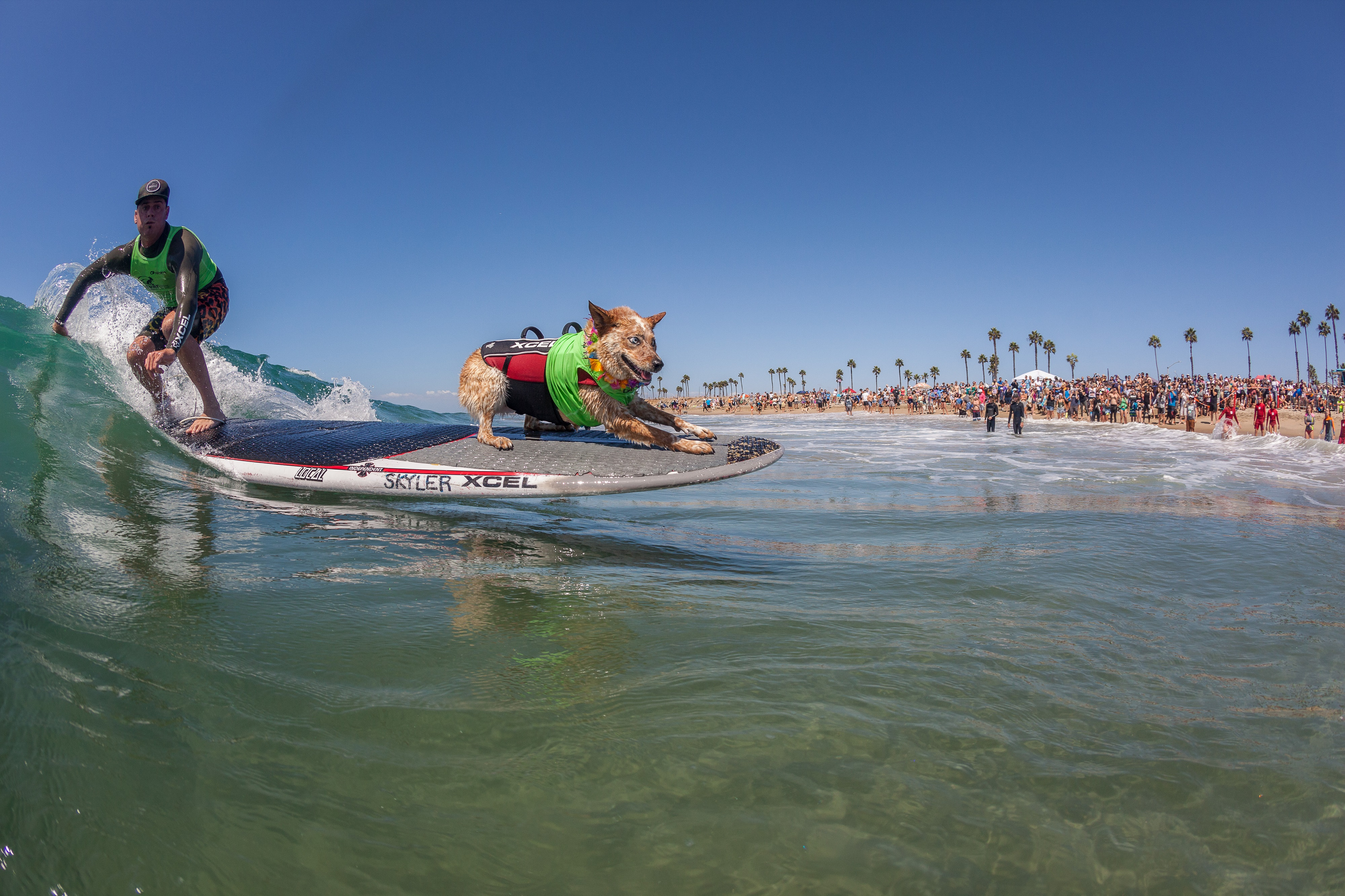 Skyler The Surf Dog Tandem Surfing With Human Photo By Daren Fentiman Huntington Beach