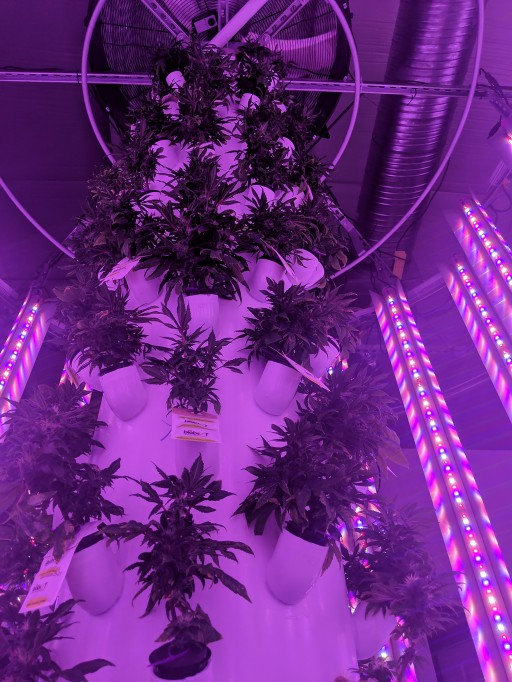 Violet Gro LED Grow Lights Partners With Hyperponic on Their Fully Integrated Vertical Tower Growing System