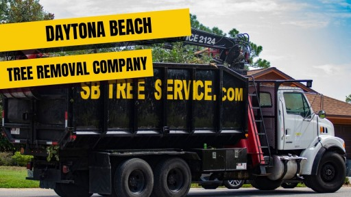 Hurricane Tree Removal Services Open to Florida Homes and Business Owners