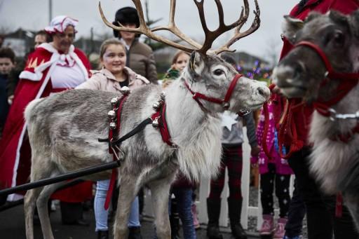 Santa's Reindeer Visit Firhouse