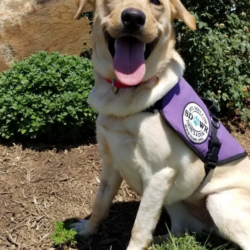 Service Dogs by Warren Retrievers Delivers Diabetic Alert Dog to Young Girl in Daingerfield, TX