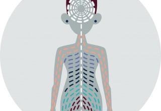 Medigraytion's Interoception Illustration