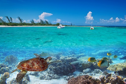 What Makes Ambergris Caye a Place Worth Moving To?