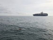 Abigail Bergman swimming across the English Channel