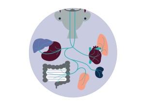 Vagus Nerve Illustration
