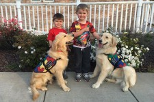 SDWR places pure bred golden and labrador retrievers and doodles on a required medical necessity for those living with invisible disabilities.
