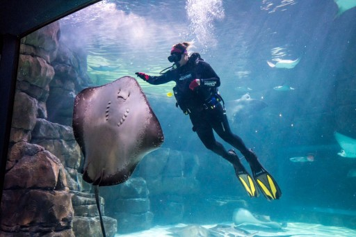 IBCCES Designates Ripley's Aquarium of the Smokies as a Certified Autism Center