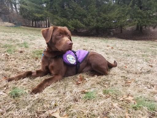 Lifesaving Seizure Response Service Dog Delivered to 32-Year-Old Man in Newark, Delaware