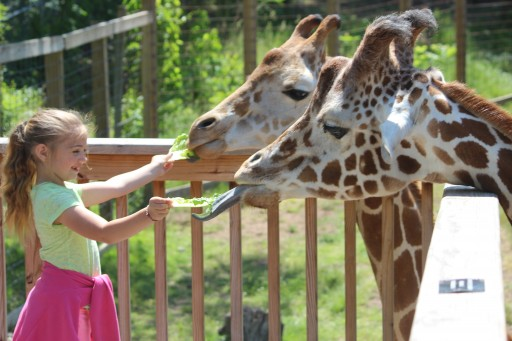 Zoo Becomes First to Earn Certified Autism Center Designation