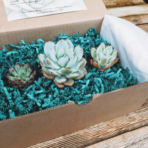 Plant Expert US Brand THE PARCHED GARDEN Announces the Launch of Its Monthly Subscription Club for Its Rare and Stunning Finds of Succulents