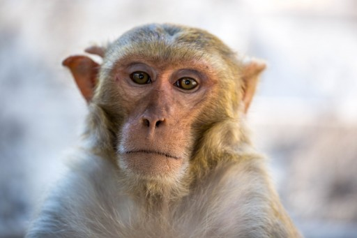 Primate Research Firm Explores Blockchain Technology