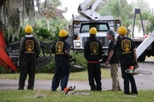 Hurricane Tree Removal Services