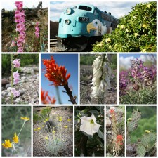 Spring in Bloom at Verde Canyon Railroad