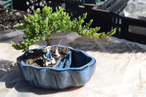 Learn the Art of Bonsai From 9GreenBox.com - Producing Lavish Household Plants and Accessories Since 2007