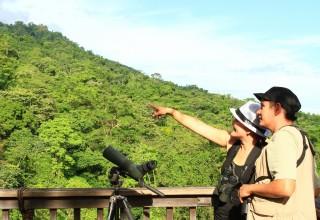 Birdwatching at Pico Bonito National Park