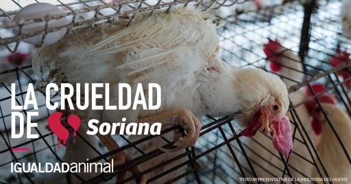 Activists Demand Soriana Make Animal Welfare Improvements