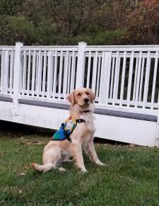 Bohach, a Golden Retriever Autism Service Dog