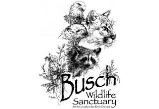 Busch Wildlife Sanctuary Logo