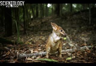 Tiny marsupials