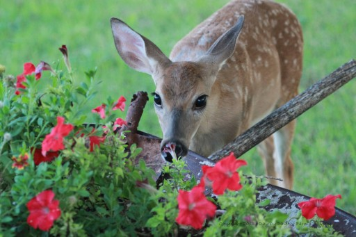 New Solutions Help Reduce Landscape Damage Caused by Deer and Other Wildlife