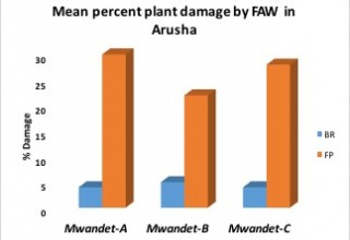 Plant Damage in Arush