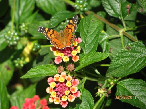 Butterfly Gardens Discovers SBA 504 Program and Achieves Dream of Property Ownership