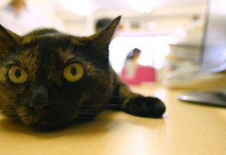 Cats in a Tokyo Office