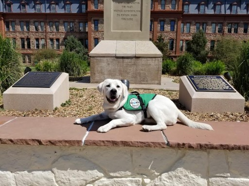 Service Dogs by Warren Retrievers Delivers Diabetic Alert Dog to Boy in Colorado Springs