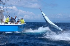 Marlin Tournament Hookup at Tropic Star Lodge