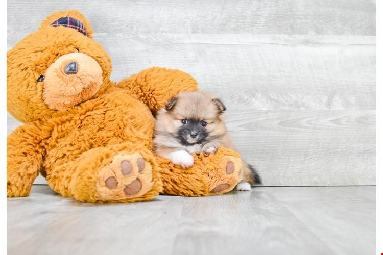 PremierPups com Shares Amazing Puppy Pickup Videos | Newswire