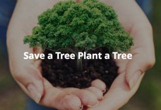 Save a tree plant a tree