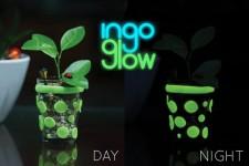 Ingo Glow