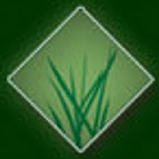 Arizona Luxury Lawns Offering Arizona Artificial Grass Alternative For High Summer Temperatures