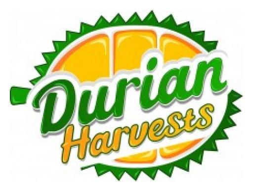 Durian Harvests Exports Musang King Durian to China