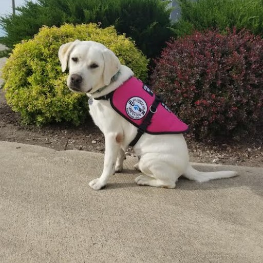 Service Dogs by Warren Retrievers Delivers Diabetic Alert  Service Dog to Child in Suisun City, CA