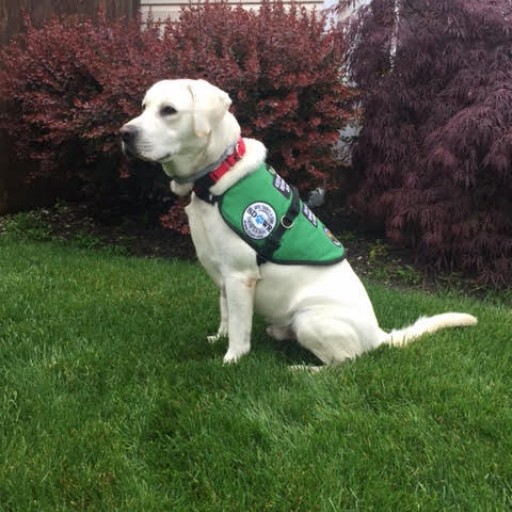 Service Dogs by Warren Retrievers Delivers Diabetic Alert  Service Dog to Little Girl in Manahawkin, Nj
