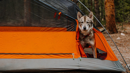 Kings Peak Tent, First Ever 2-Person, 1-2 Dog Tent