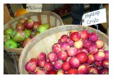 BUSHELS OF JULIAN APPLES