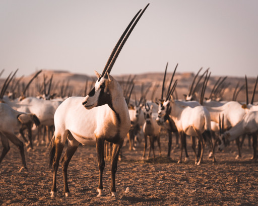 Meet the six incredible animals you didn't know were in Qatar