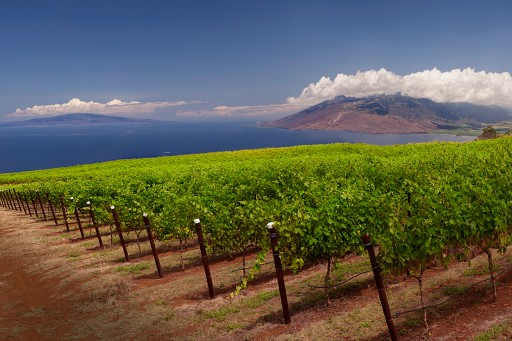 Discover Maui's Craft Beer, Wine & Spirits Community