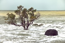 Tree vs Rising Tides